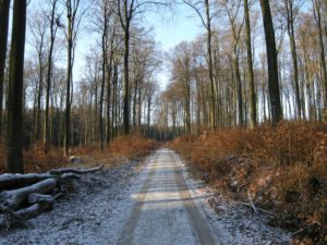Sneeuw op de wandeling E1 door de Deister